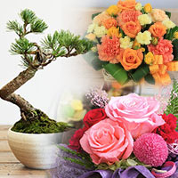 全ての花・盆栽
