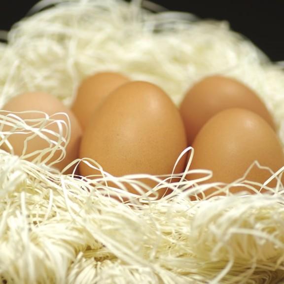 朝採り新鮮野口さんのこだわり卵40個