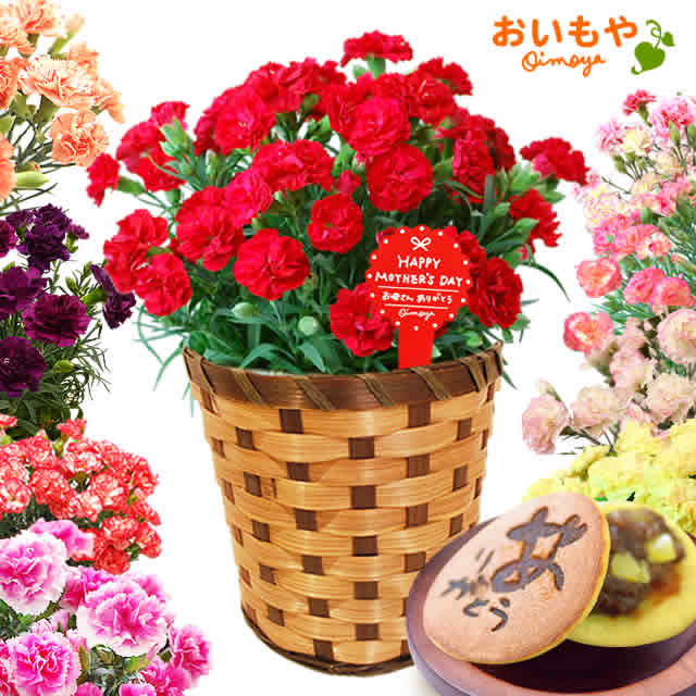 選べる鉢花カーネーション&どら焼きset